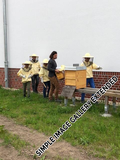 Bienen_AG_5