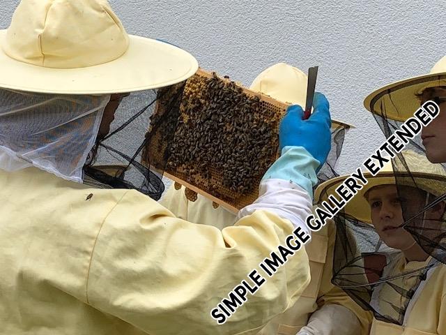 Bienen_AG_9