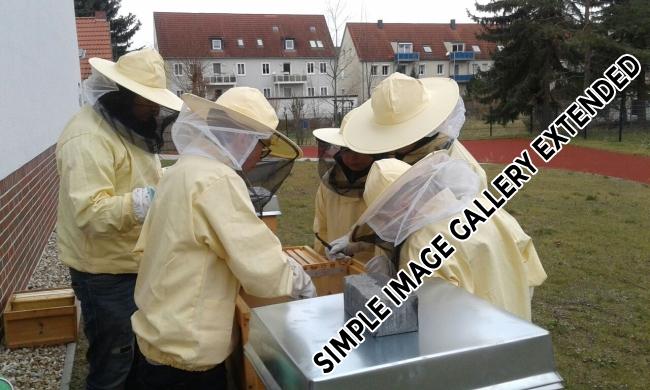 Bienen_AG_2