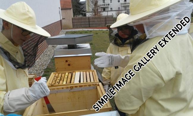 Bienen_AG_1